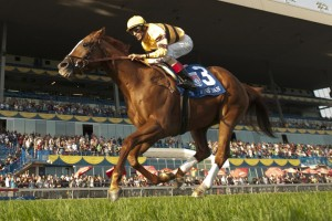 Ricoh Woodbine Mile 2012 Wise Dan Jockey John Velazquez WEG/michael burns photo